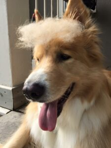 @bartthedog as Trump
